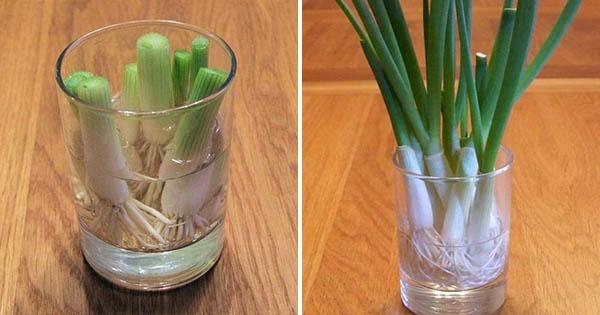 小資族必學!用杯子種出「6種蔬菜」 隨採隨吃免擔心食安