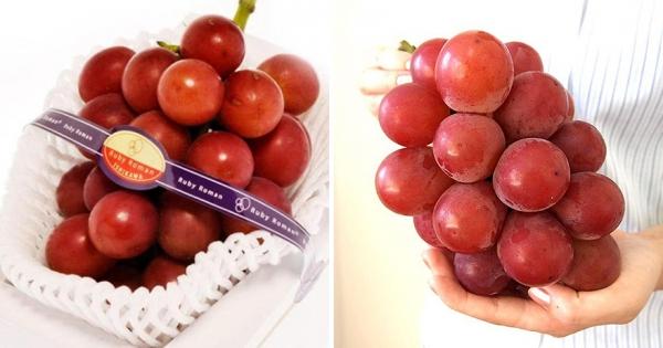 世界最貴葡萄「一串31萬」還不容易買到 專家花14年才開發出「完美味道」